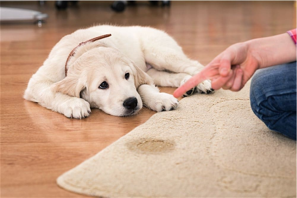 PET ODOR REMOVAL STAIN REMOVAL